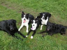 dog group image