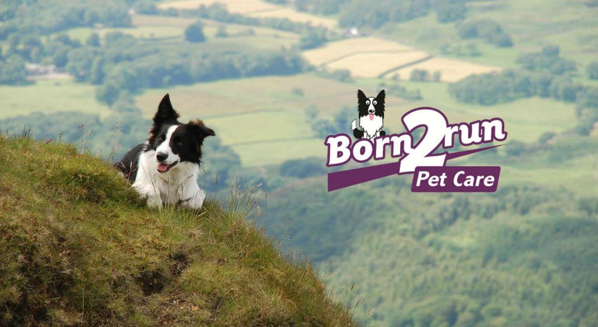 Born2Run Pet Care Header Image